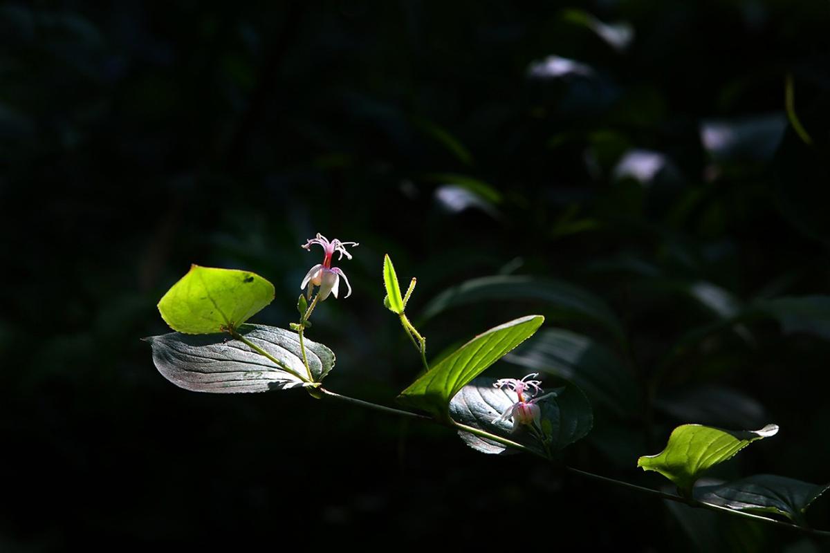 Closeup Lens 꽃1 사용전.jpg