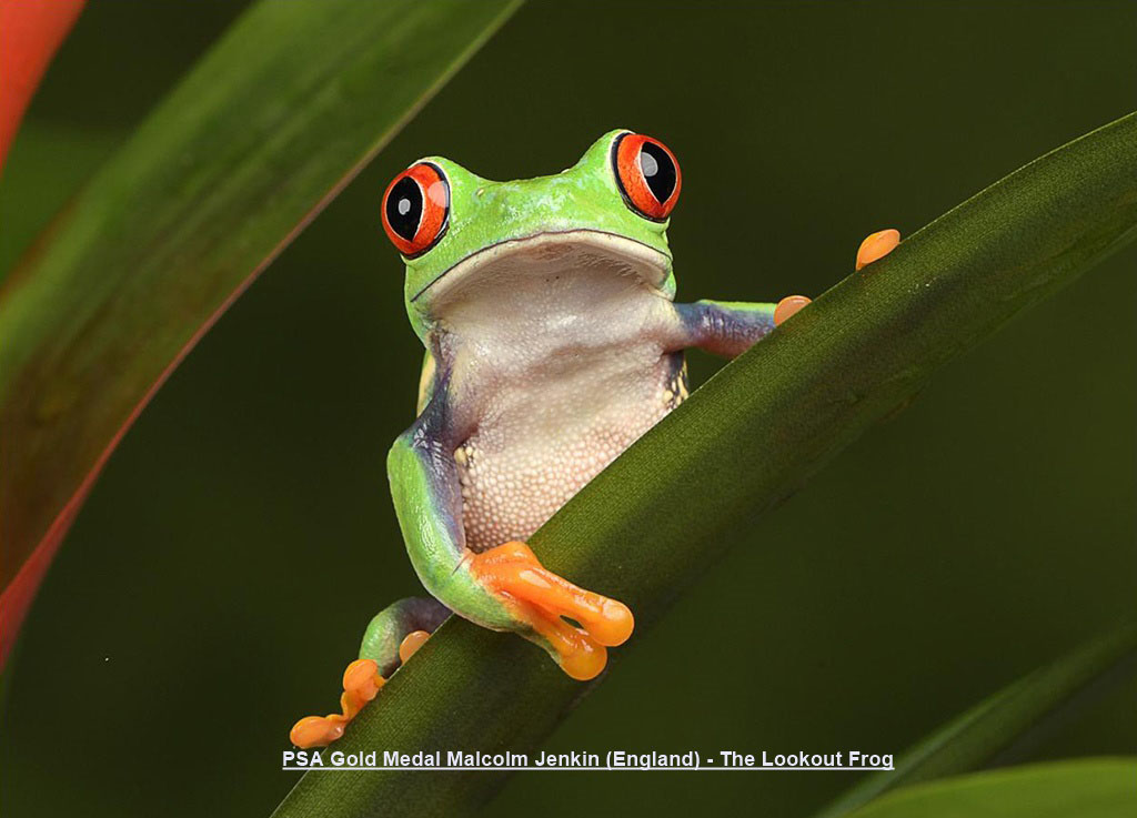 NA2-PSA Gold Medal Malcolm Jenkin (England) - The Lookout Frog.jpg