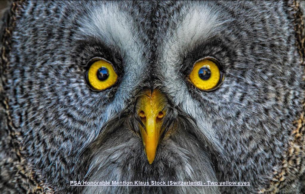 NA8-PSA Honorable Mention Klaus Stock (Switzerland) - Two yellow eyes.jpg